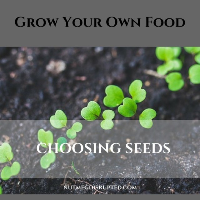 Grow Your Oen Food Selecting seeds on Nutmeg Disrupted