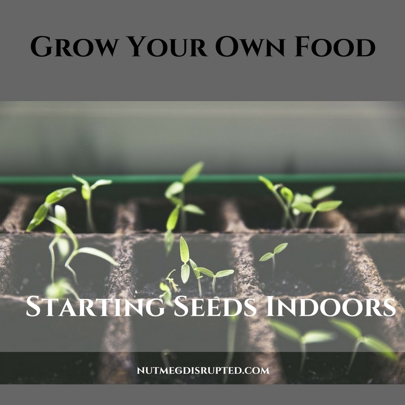 Grow Your Own Food with Nutmeg Disrupted Starting Seeds Indoors