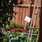 Grow Your Own Food – Summer Garden Chores