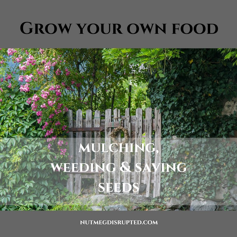 Grow Your Own Food - Mulching, Weeding & Saving Seeds with Nutmeg Disrupted