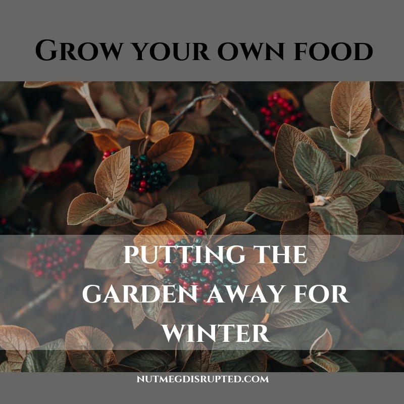 Grow Your Own Food - Putting the Garden Away for Winter on Nutmeg Disupted