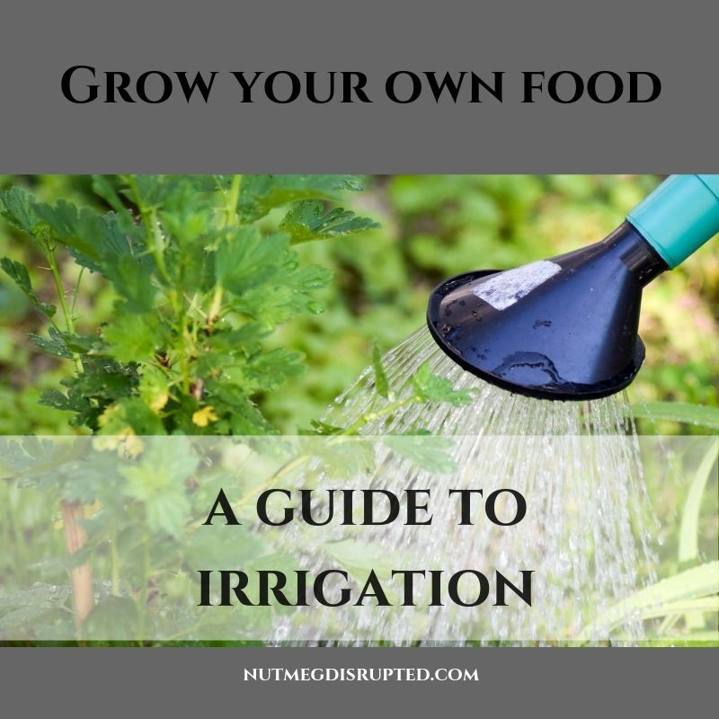 Grow Your Own Food A Guide to Irrigation with Nutmeg Disrupted