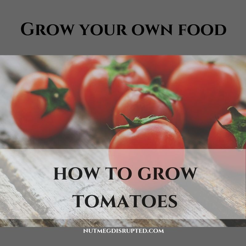 Grow Your Own Food How to Grow Tomatoes on Nutmeg Disrupted