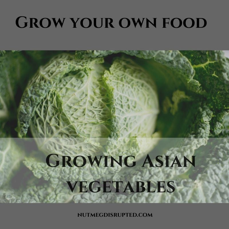Grow Your Own Food Growing Asian Vegetables