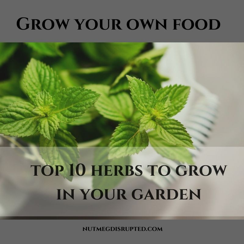 Grow Your Own Food Top 10 Herbs to Grow In Your Garden on Nutmeg Disrupted