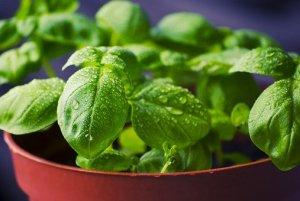 alimentation équilibrée pour les enfants grâce aux herbes aromatiques