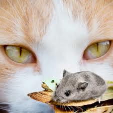 Рецепты еды для кошек в домашних условиях. Питание кошек: натуральное, смешанное и лечебное