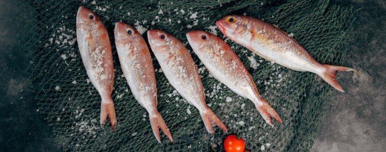 多吃魚-100公克-健康-慢性病-main