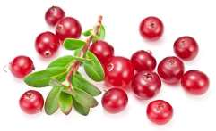 Ripe Red Cranberries With Green Leaves.