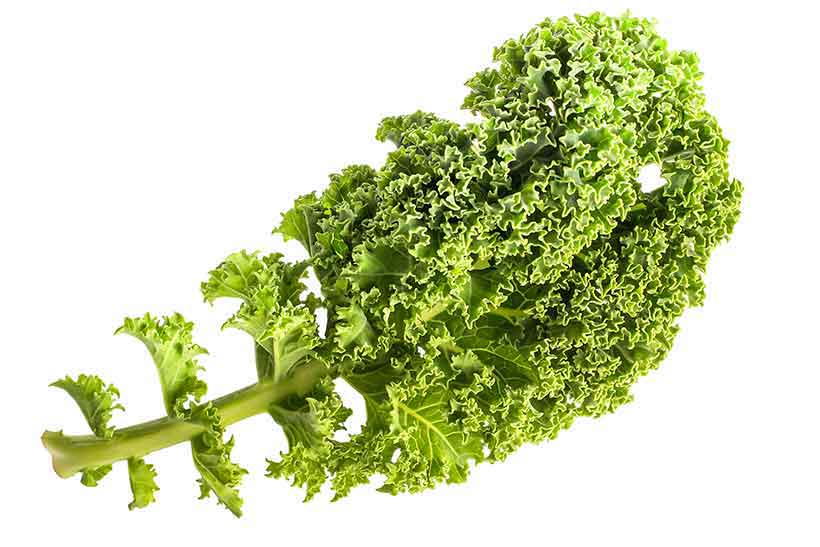 A Curly and Leafy Kale Leaf.