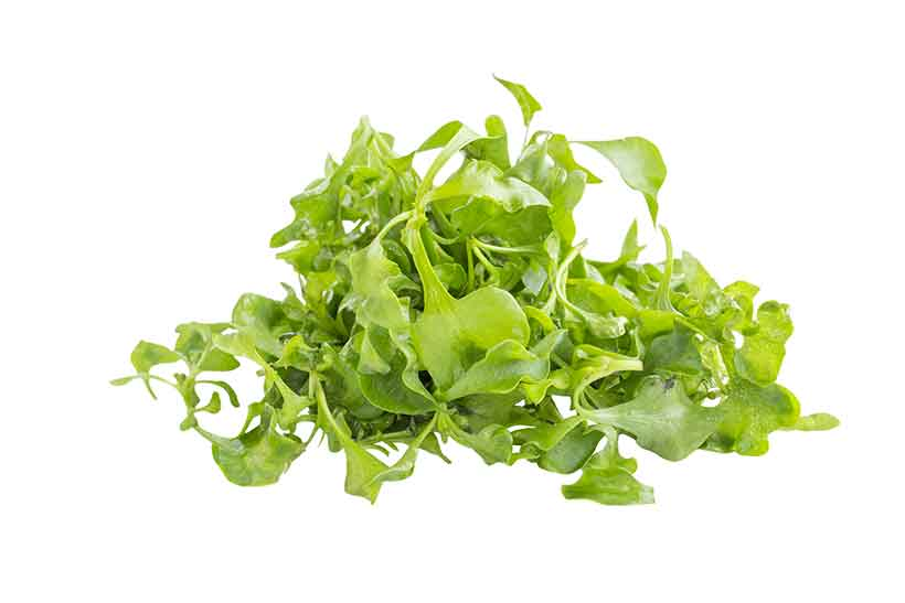 Raw Organic Green Watercress Leaves.