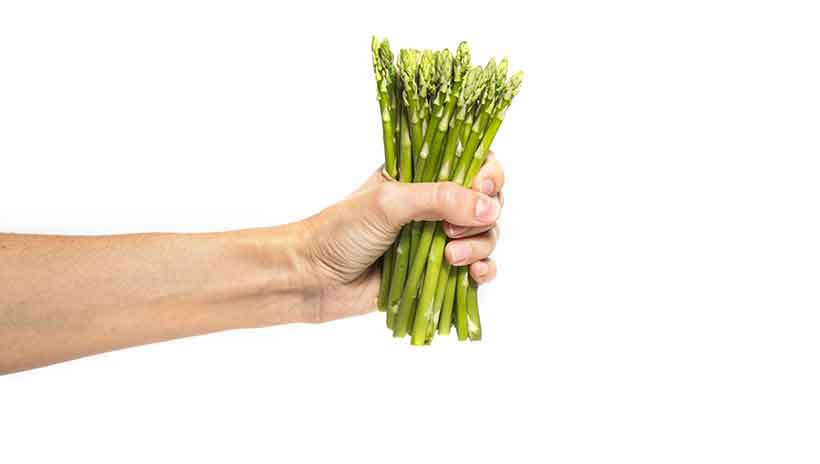 A Woman's Hand Holding a Bunch of Asparagus Stalks.