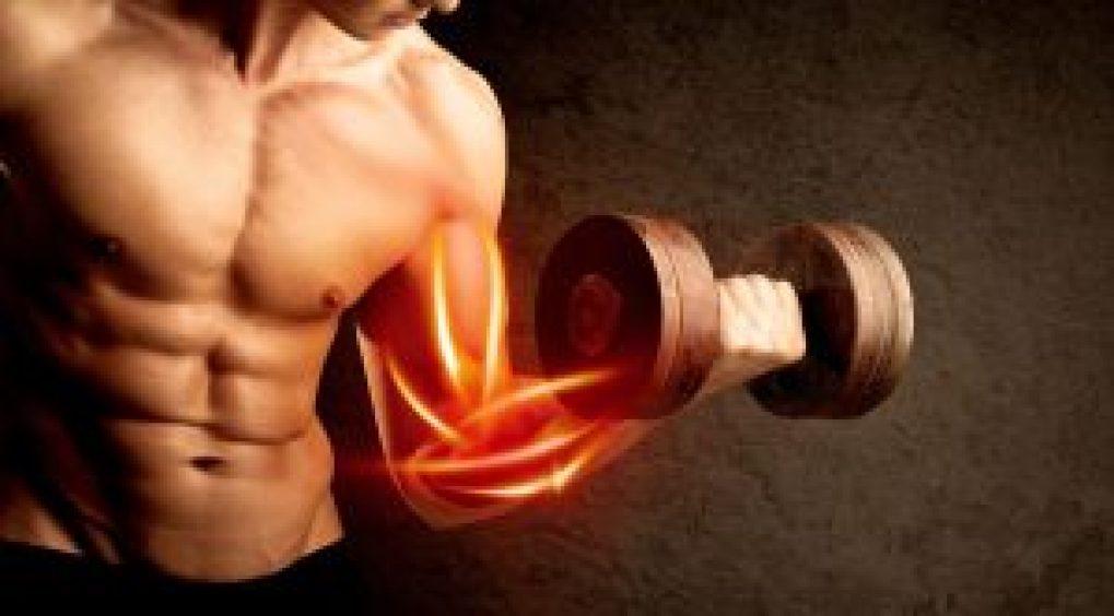 Genetics In Building Muscle