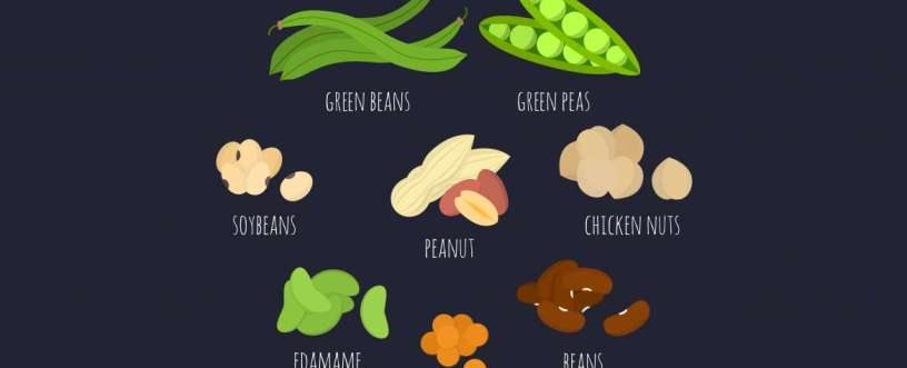 The Best Plant-Based Protein Sources Ideal For Vegans