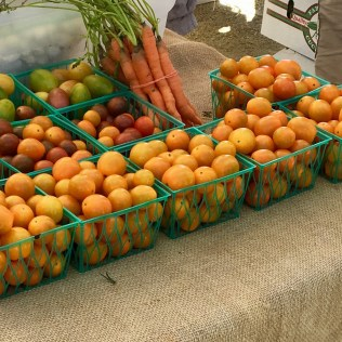 Beautiful tomatoes and carrots