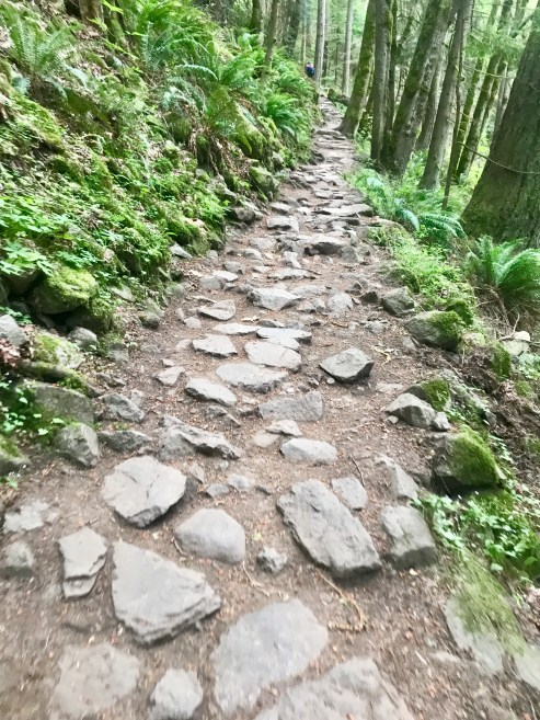 View of the beginning of a hike up Tiger Mountain, Seattle