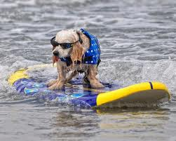 Paddle board or kayak with your dog?