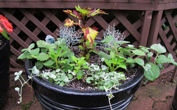 Important-Herbs-For-Your-Container-Garden