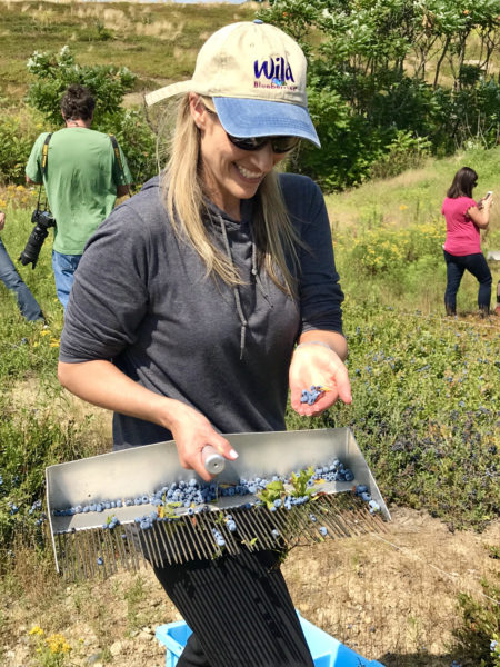 Everything you need to know about Wild Blueberries