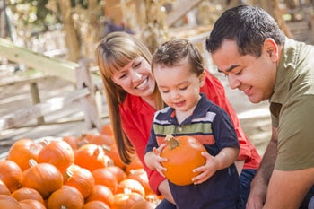 Choosing a pumpkin