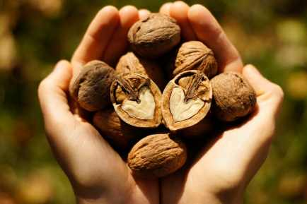 Handful of walnuts