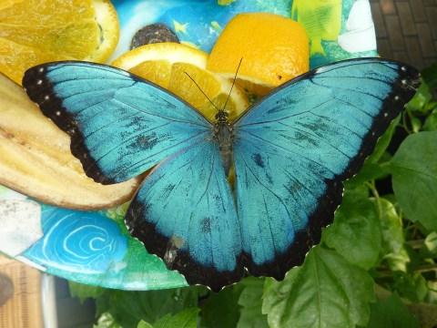 Mi mariposa azul. Primer post