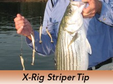 Pro-Tip-X-Rig-Stripers