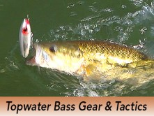 Pro_Tips_Bass_Topwater