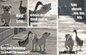 goose 4