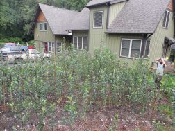 one of our nurseries in Asheville