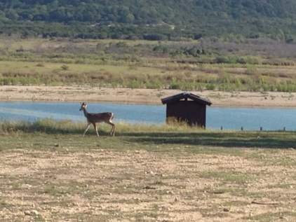 Hiking with deer on Sept 25 2014 at Dana Peak Park