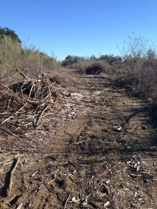 Sidewinder trail at Dana Peak Park after the fire