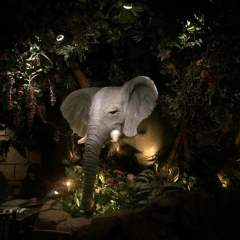Rainforest Cafe in San Antonio || Dining for the entire family!