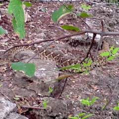 Why you should pee before hanging out with a rattlesnake