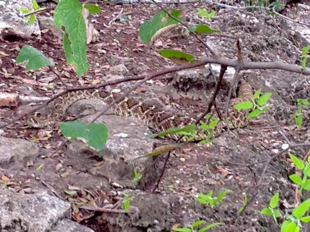 how to get away from a rattle.snake