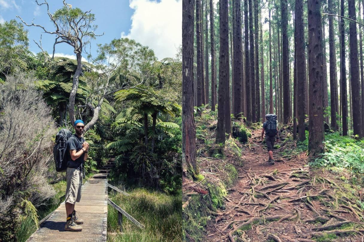 Trekking La Reunion Wald Berge