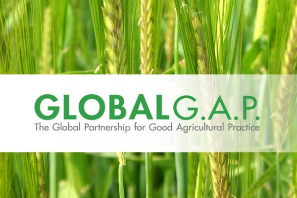 В 155 фермерских хозяйствах Узбекистана будет внедрен международный стандарт Global G.A.P