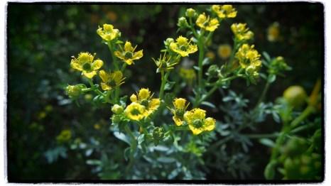 bir takım şifalı bitkiler