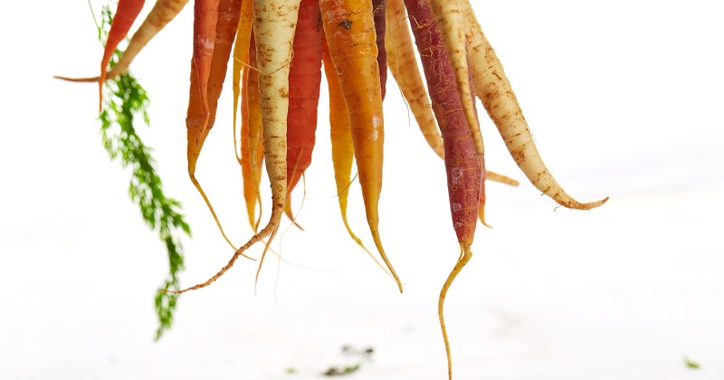 Carrots against white background