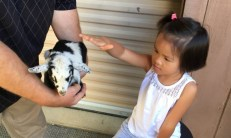 Student petting baby goat