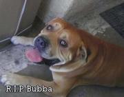 R.I.P. Bubba