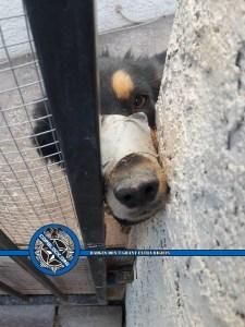 Las Vegas Metro Animal Abuse