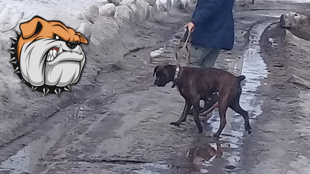 Собака бывает кусачей. А если их много, и они живут прямо за вашим забором?