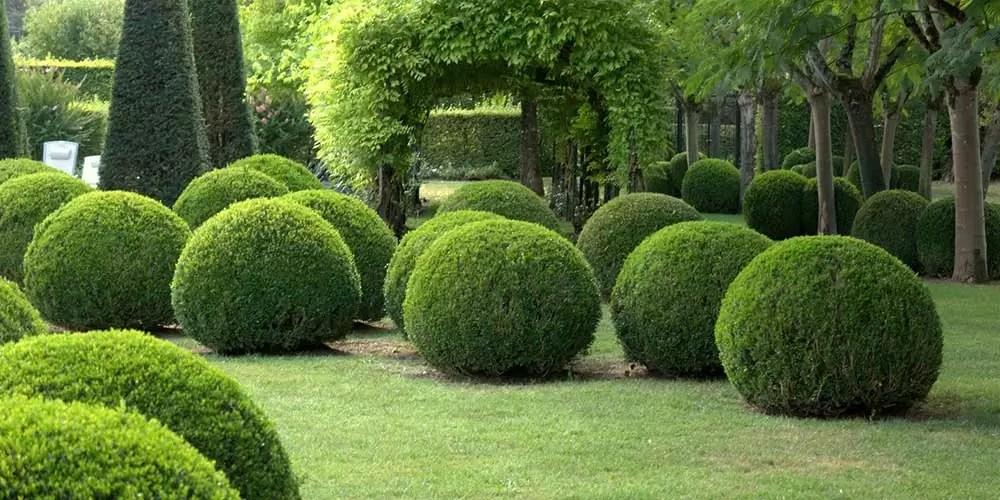 Randhaagbeplanting Buxus sempervirens