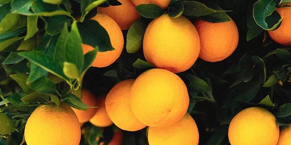 Citrusgewassen