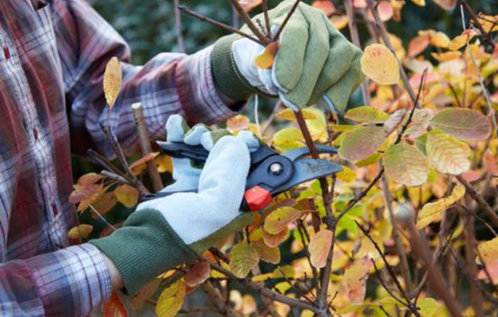 pruning perennials for fall cleanup