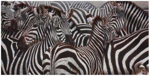 DM_Zebras_IMG_1706_1