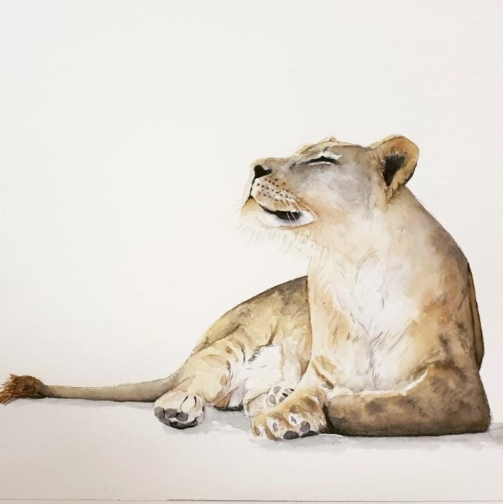 LP_Lioness