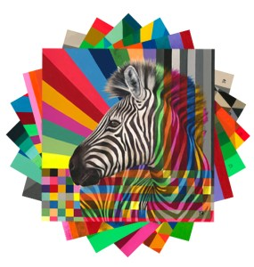 Wildlife In Colour: Leopard, Rhino, Kudu, Zebra, Buffalo, Wild Dog Card Pack & Envelopes