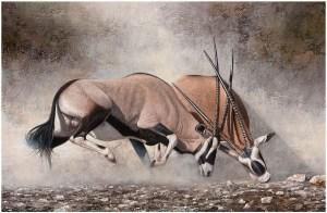 Clashing of Horns by Danie Marais showing Gemsbokke (Oryx) fighting for dominance